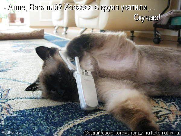 Котоматрица: - Алле, Василий? Хозяева в круиз укатили,...  Скучаю!