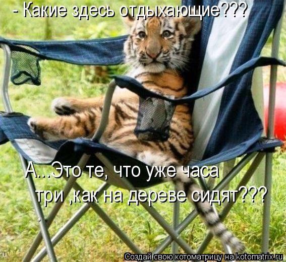 Котоматрица: - Какие здесь отдыхающие???  А...Это те, что уже часа  три ,как на дереве сидят???