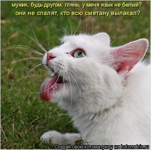 Котоматрица: мужик, будь другом, глянь, у меня язык не белый?  они не спалят, кто всю сметану вылакал?