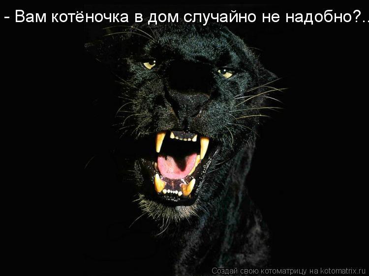 Котоматрица: - Вам котеночка в дом случайно не надобно?... ..