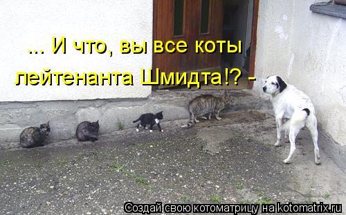 Котоматрица: ... И что, вы все коты  лейтенанта Шмидта!? -