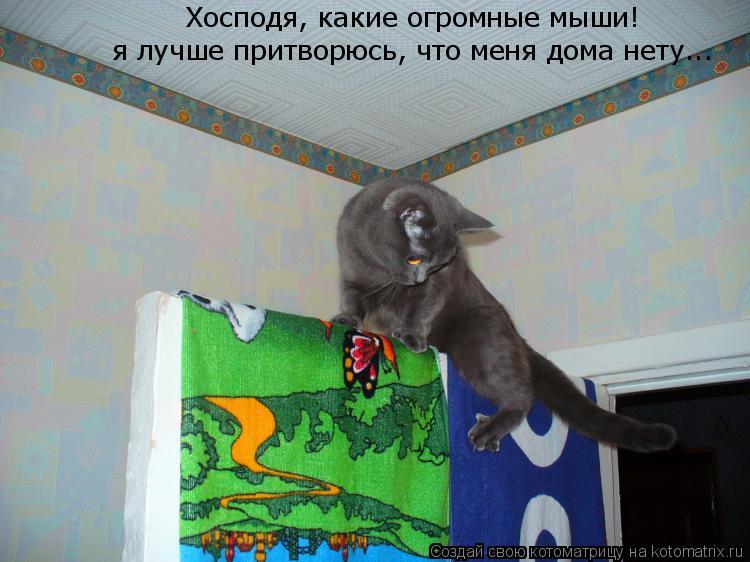 Котоматрица: Хосподя, какие огромные мыши!  я лучше притворюсь, что меня дома нету...