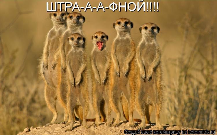 Котоматрица: ШТРА-А-А-ФНОЙ!!!!