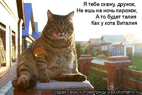 Котоматрица: Я тебе скажу, дружок, А то будет талия Не ешь на ночь пирожок, Как у кота Виталия
