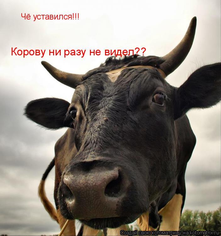 Котоматрица: Чё уставился!!! Корову ни разу не видел??
