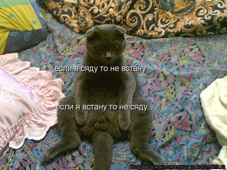Котоматрица: если я сяду то не встану если я встану то не сяду...