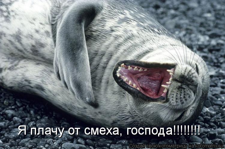 Котоматрица: Я плачу от смеха, господа!!!!!!!!