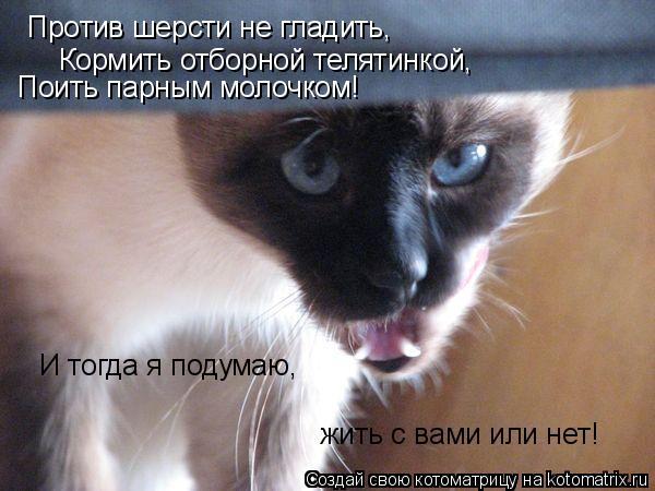 Котоматрица: Против шерсти не гладить, Кормить отборной телятинкой, Поить парным молочком! И тогда я подумаю, жить с вами или нет!