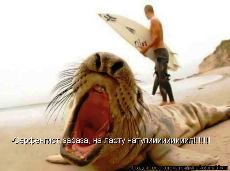 Котоматрица: -Серфенгист, зараза, на ласту натупииииииииил!!!!!!!