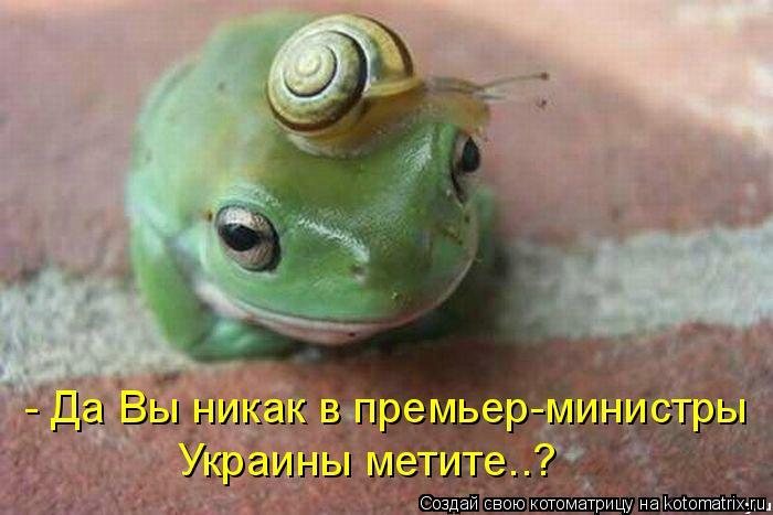 Котоматрица: - Да Вы никак в премьер-министры Украины метите..?