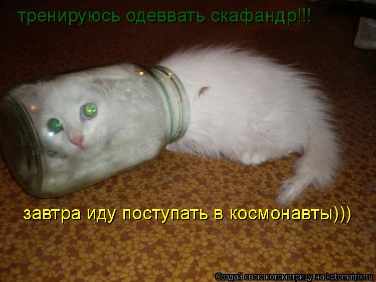 Котоматрица: тренируюсь одеввать скафандр!!! завтра иду поступать в космонавты)))