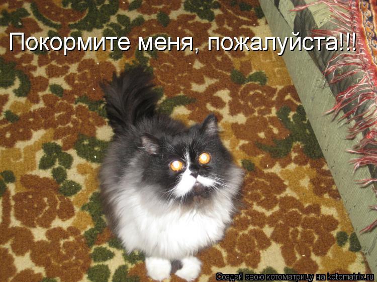 Котоматрица: Покормите меня, пожалуйста!!!