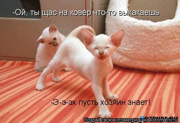 Котоматрица: -Ой, ты щас на ковёр что-то выкакаешь   -Э-э-эх пусть хозяин знает!