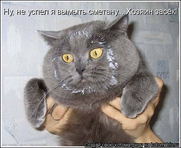 Котоматрица: Ну, не успел я вымыть сметану... Хозяин засёк!