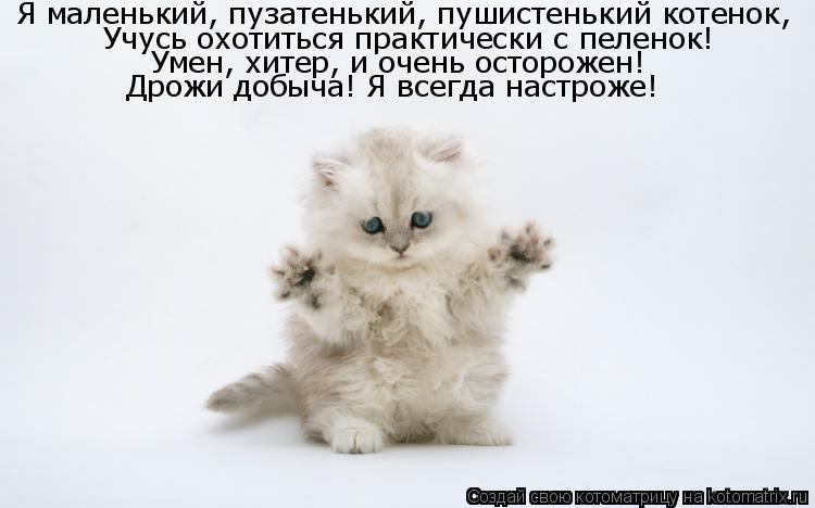 Котоматрица: Я маленький, пузатенький, пушистенький котенок, Учусь охотиться практически с пеленок! Умен, хитер, и очень осторожен! Дрожи добыча! Я всегд