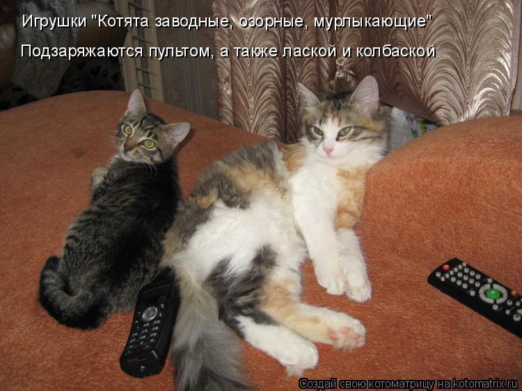 """Котоматрица: Игрушки """"Котята заводные, озорные, мурлыкающие"""" Подзаряжаются пультом, а также лаской и колбаской"""
