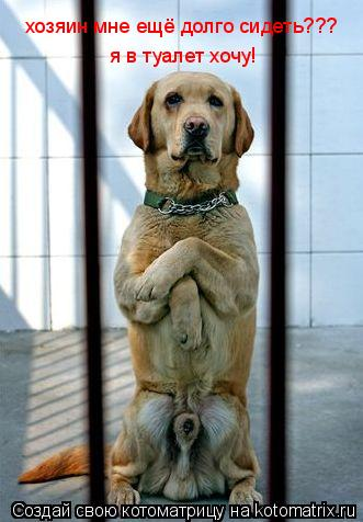 Котоматрица: хозяин мне ещё долго сидеть??? я в туалет хочу!
