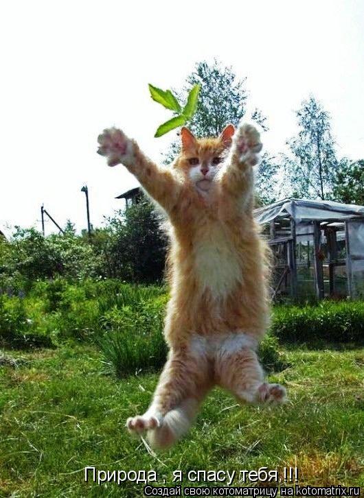 Котоматрица: Природа , я спасу тебя !!!