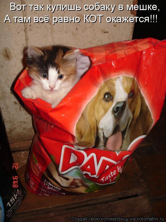 Котоматрица: Вот так купишь собаку в мешке, А там всё равно КОТ окажется!!!