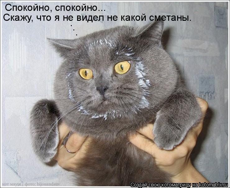 Котоматрица: Спокойно, спокойно... Скажу, что я не видел не какой сметаны. . . .