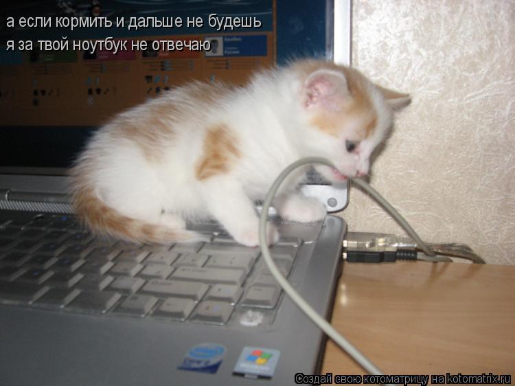 Котоматрица: а если кормить и дальше не будешь я за твой ноутбук не отвечаю