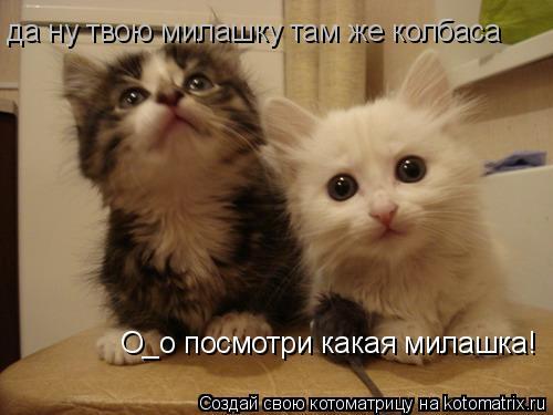 Котоматрица: О_о посмотри какая милашка! да ну твою милашку там же колбаса