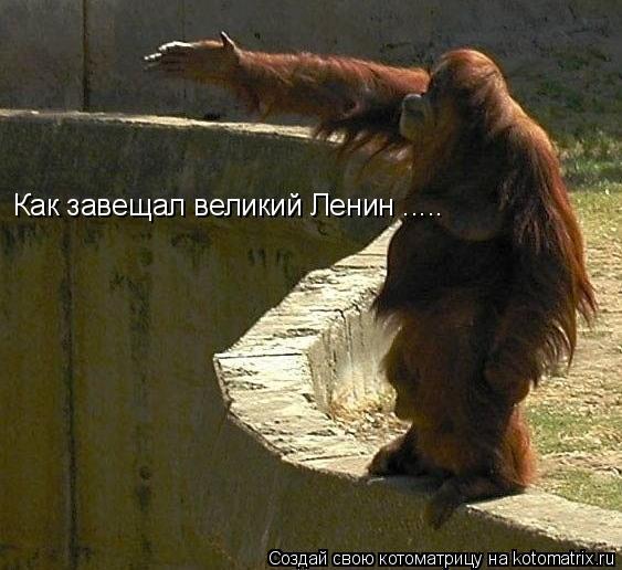 Котоматрица: Как завещал великий Ленин .....