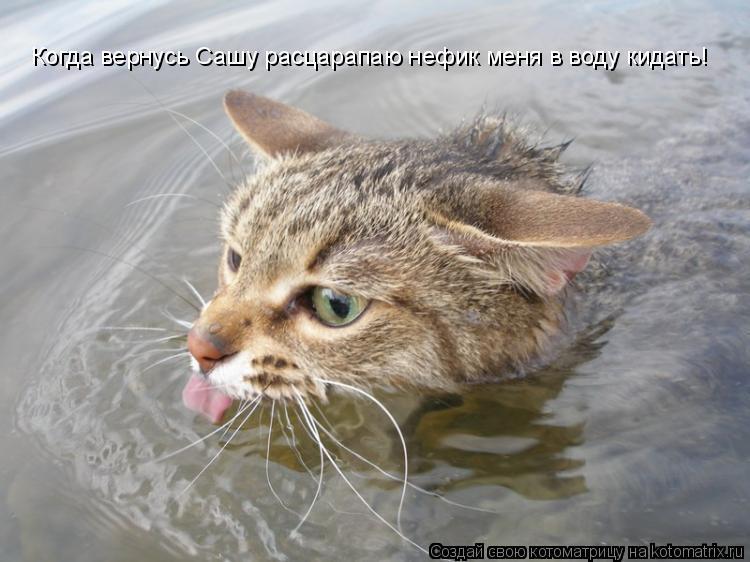 Котоматрица: Когда вернусь Сашу расцарапаю нефик меня в воду кидать!