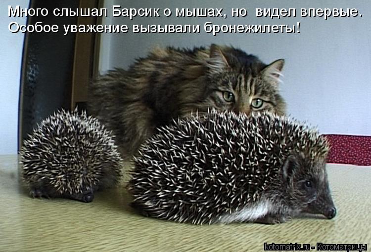 Котоматрица: Много слышал Барсик о мышах, но  видел впервые. Особое уважение вызывали бронежилеты!