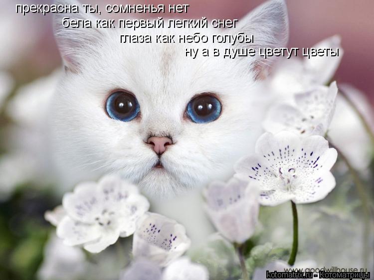 Котоматрица: прекрасна ты, сомненья нет бела как первый легкий снег глаза как небо голубы ну а в душе цветут цветы