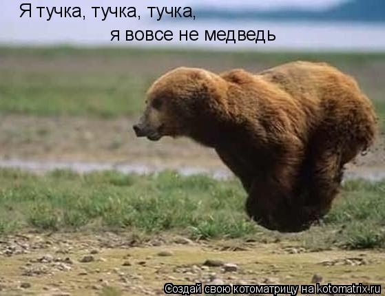 Котоматрица: Я тучка, тучка, тучка, я вовсе не медведь