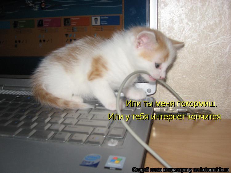 Котоматрица: Или ты меня покормиш. Или у тебя интернет кончится