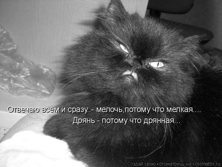 Котоматрица: Отвечаю всем и сразу..- мелочь,потому что мелкая.... Дрянь - потому что дрянная...