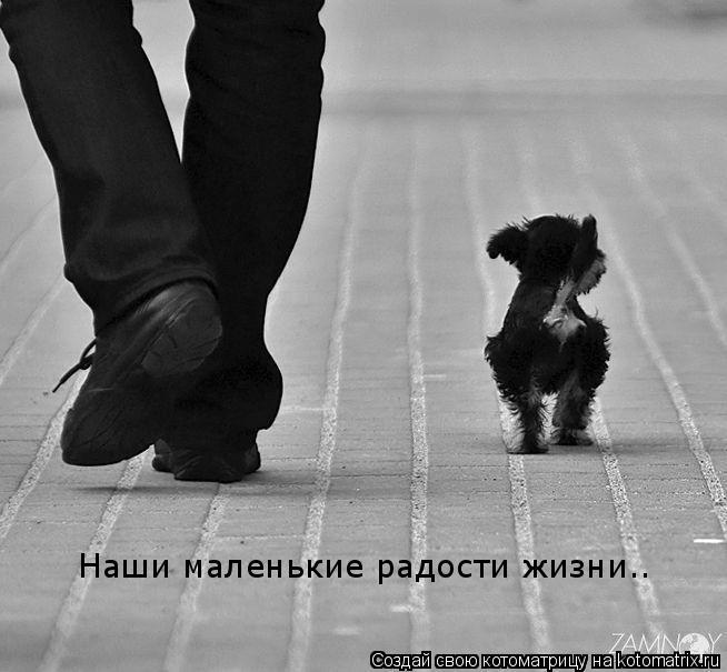 Котоматрица: Наши маленькие радости жизни..