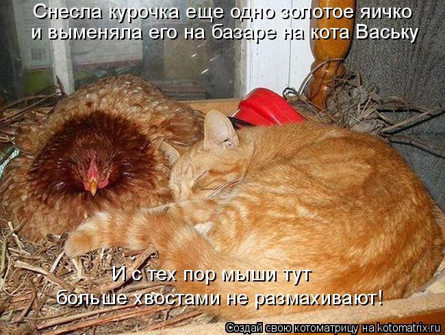 Котоматрица: Снесла курочка еще одно золотое яичко и выменяла его на базаре на кота Ваську И с тех пор мыши тут  больше хвостами не размахивают!