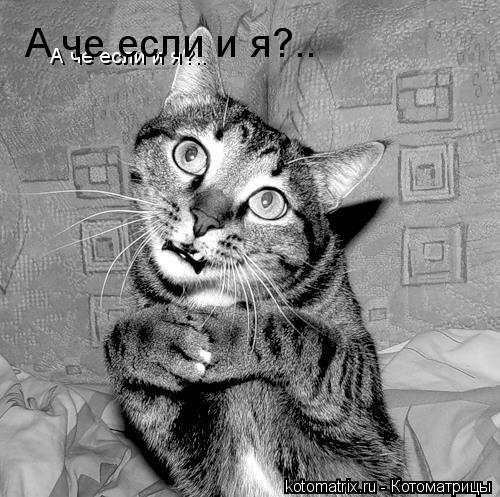 Котоматрица: А че если и я?.. А че если и я?..