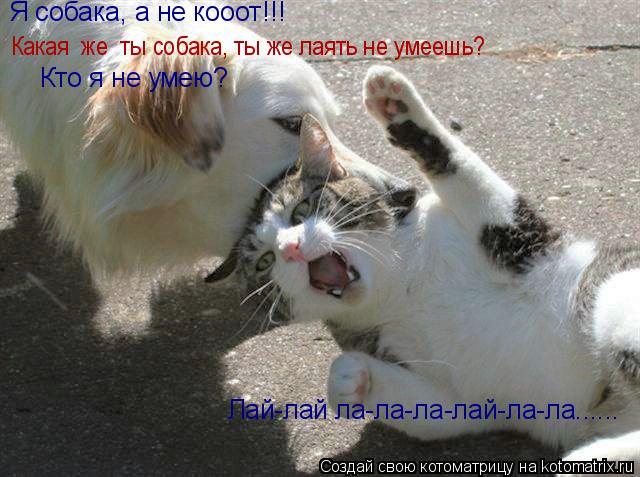 Котоматрица: Какая  же  ты собака, ты же лаять не умеешь? Я собака, а не коooт!!!  Кто я не умею? Лай-лай ла-ла-ла-лай-ла-ла......