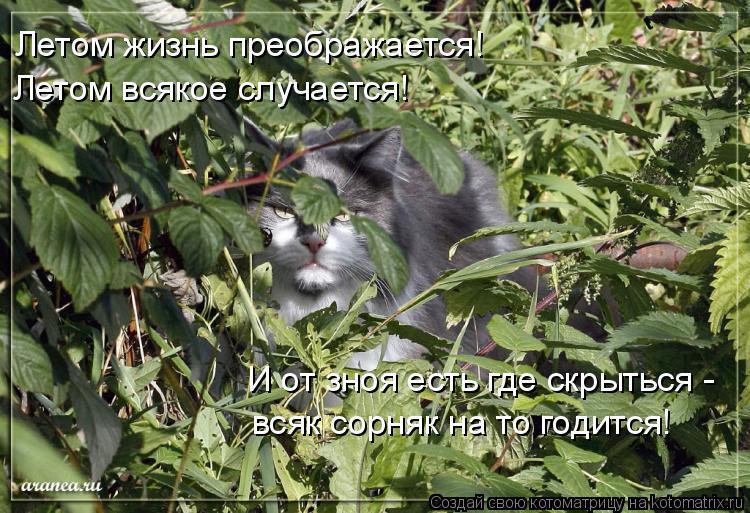 Котоматрица: Летом жизнь преображается! Летом всякое случается! И от зноя есть где скрыться - всяк сорняк на то годится!