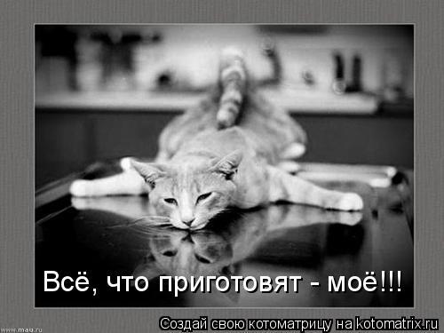 Котоматрица: Всё, что приготовят - моё!!!