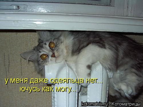 Котоматрица: у меня даже одеяльца нет... ючусь как могу...