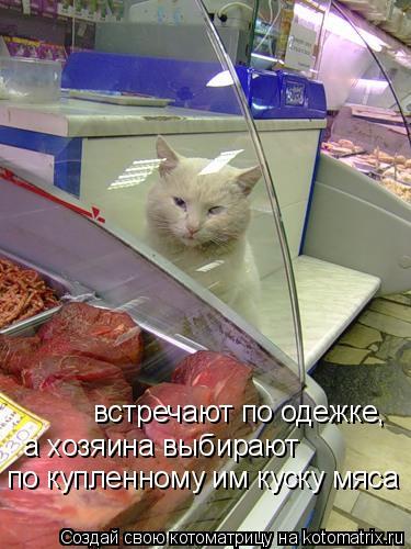 Котоматрица: встречают по одежке, а хозяина выбирают  по купленному им куску мяса