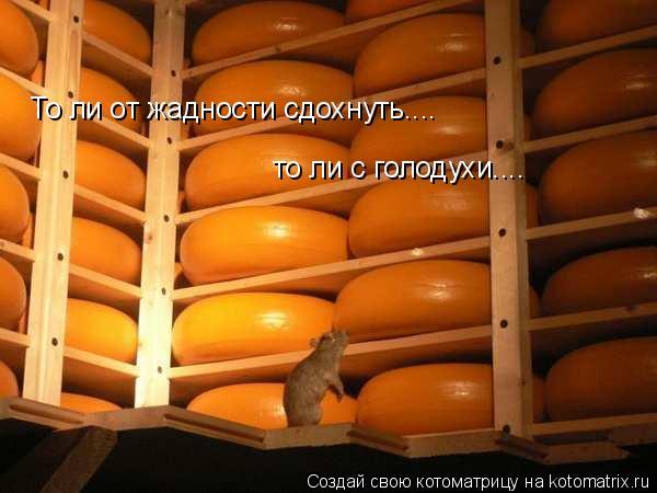 Котоматрица: То ли от жадности сдохнуть.... то ли с голодухи....