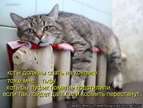 Котоматрица: коты должны спать на коврике.... тоже мне... тьфу.... хоть бы пуфик помягче подстилили... если так пойдет дальше и кормить перестанут...