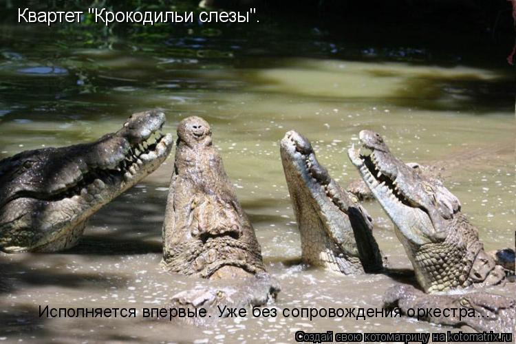 """Котоматрица: Квартет """"Крокодильи слезы"""". Исполняется впервые. Уже без сопровождения оркестра..."""