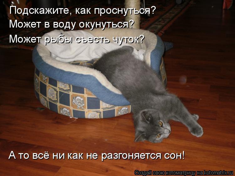Котоматрица: Подскажите, как проснуться?  Может в воду окунуться?  Может рыбы съесть чуток? А то всё ни как не разгоняется сон!