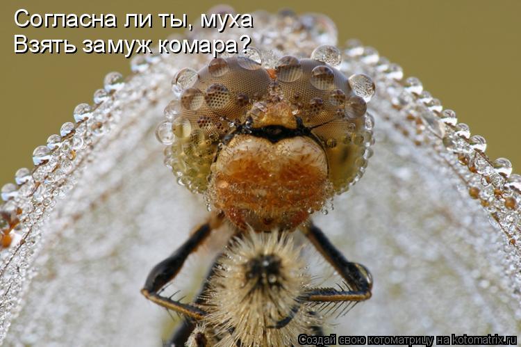 Котоматрица: Согласна ли ты, муха Взять замуж комара?