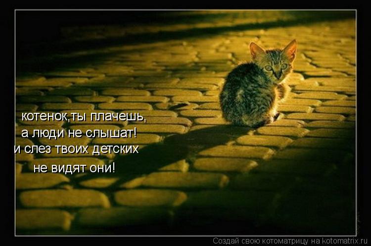 Котоматрица: котенок,ты плачешь, а люди не слышат! и слез твоих детских  не видят они!