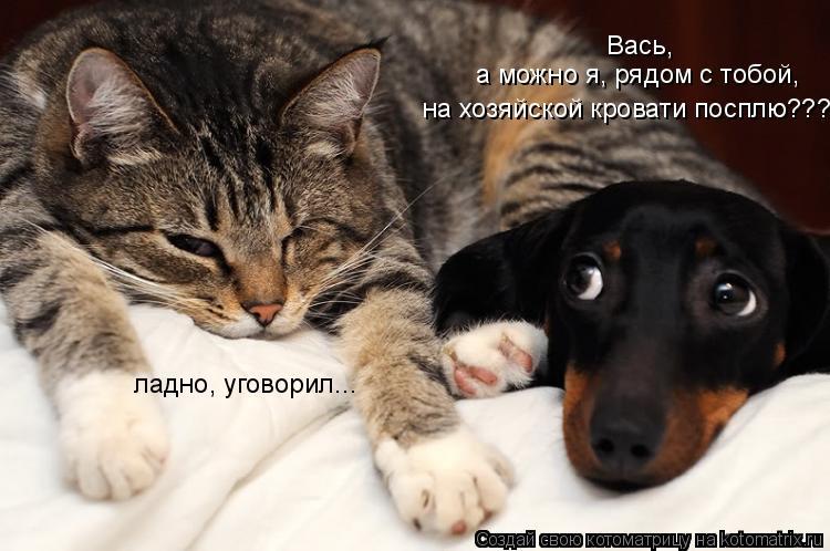 Котоматрица: Вась,  а можно я, рядом с тобой,  на хозяйской кровати посплю??? ладно, уговорил...