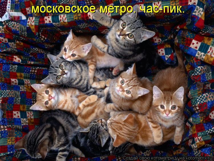 Котоматрица: московское метро. час-пик.