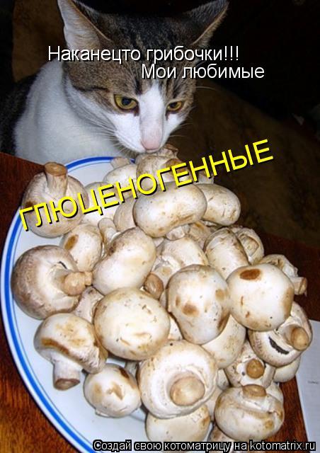 Котоматрица: Наканецто грибочки!!! Наканецто грибочки!!! Мои любимые ГЛЮЦЕНОГЕННЫЕ